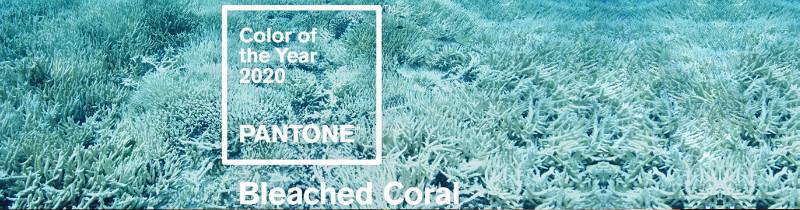 Цветом 2020 года станет оттенок мертвых кораллов?